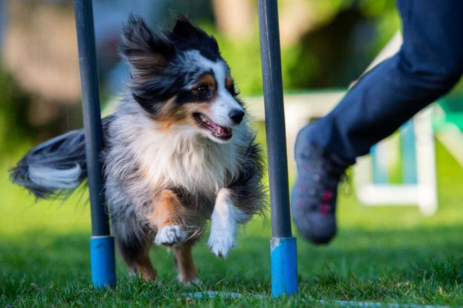 Hundetraining kann mit den falschen Methoden schädlich sein.