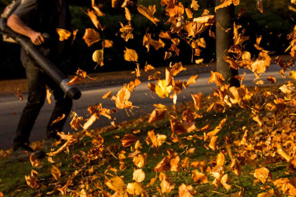 Laubbläser sind im Einsatz gegen Herbstlaub umstritten (Archivbild)