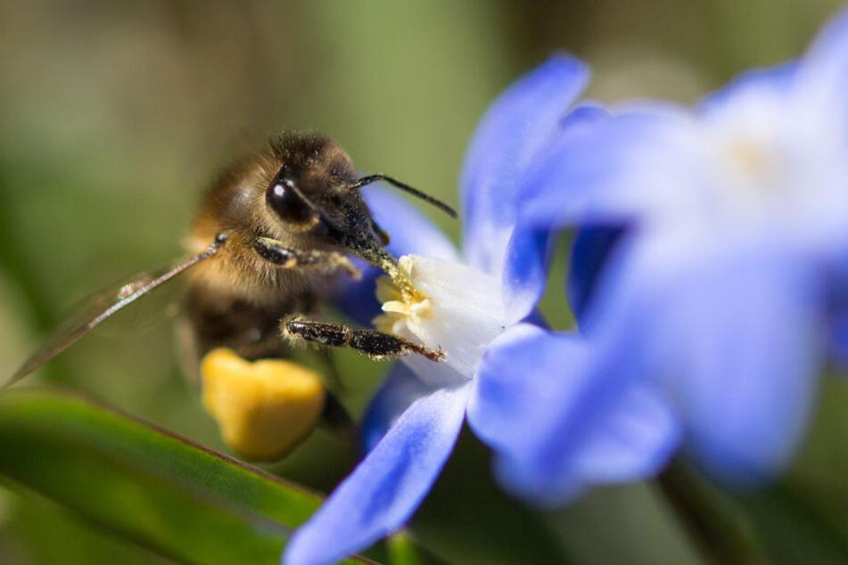 """Das Volksbegehren """"Rettet die Bienen"""" stieß in Bayern auf großen Anklang. (Symbolbild)"""