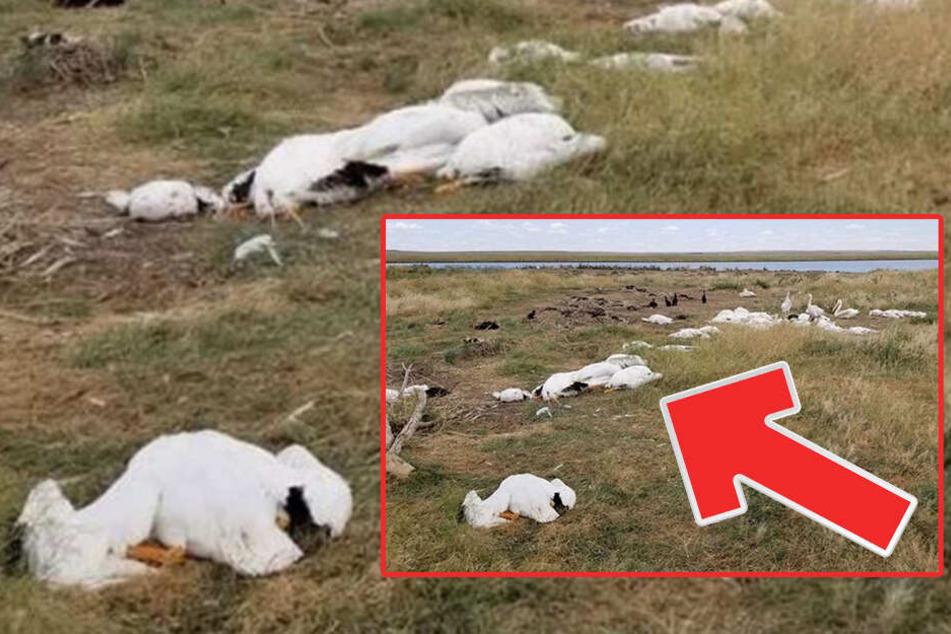 Tausende Vögel fallen tot vom Himmel: Das ist der ...