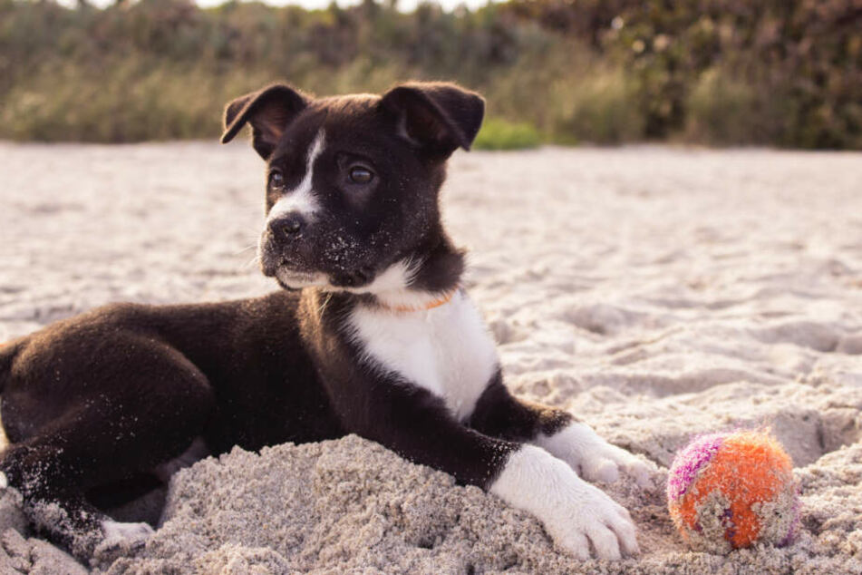 Wer sich bewusst macht, dass Hunde Rottöne nicht gut sehen, kann seinem Fiffi mit dem richtigen Spielzeug helfen.