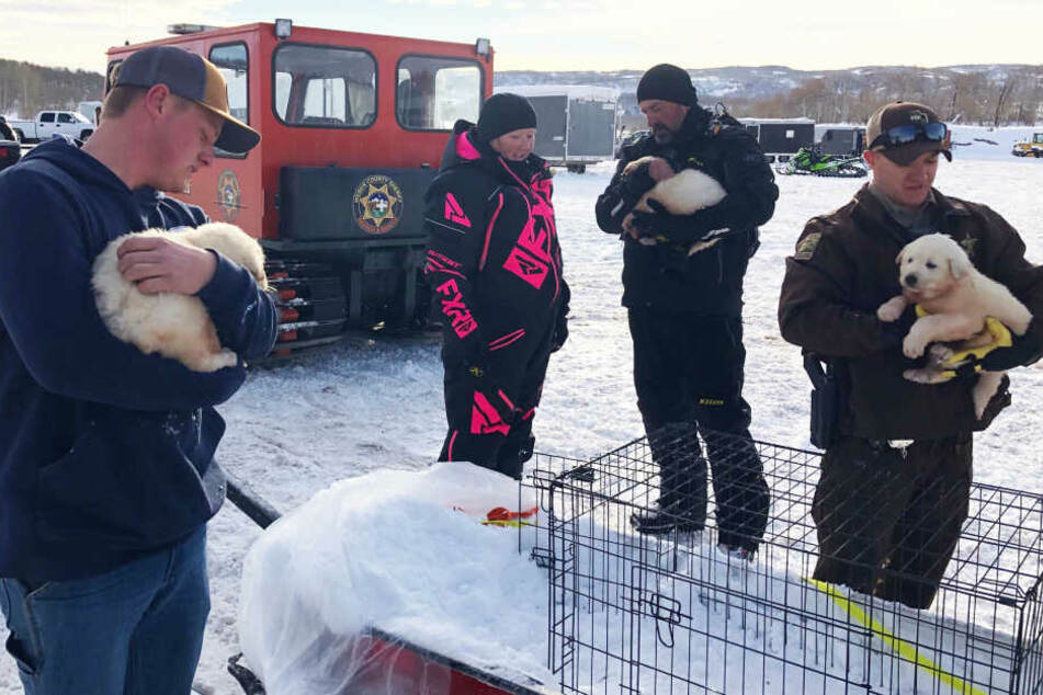 Auf dem Rettungsschlitten wurden die Hunde ins Tal gebracht.