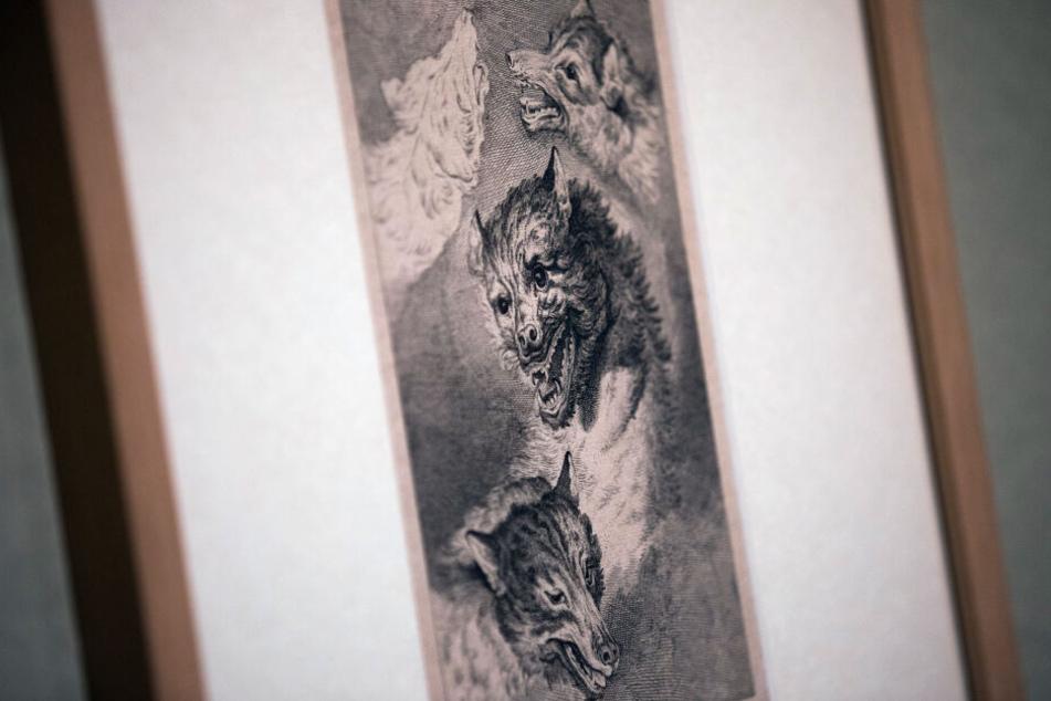 Eine Wolfsdarstellung des Künstlers Johann Elias Ridinger hängt im Wallraf-Richartz-Museum.