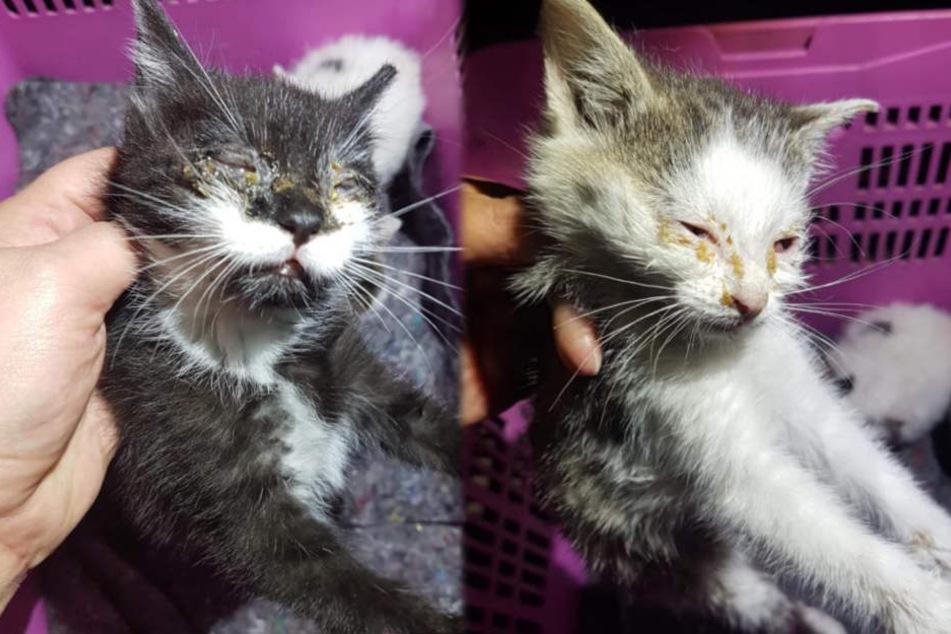 Nur drei Kitten überlebten – doch ihr Zustand ist kritisch.