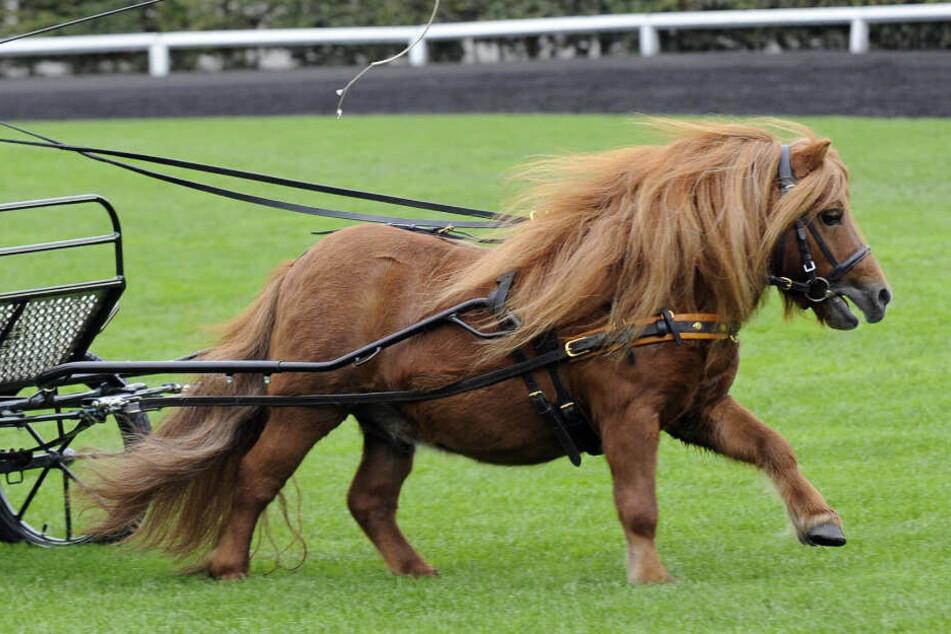 Das Pferd ließ sich nicht beruhigen (Symbolfoto).