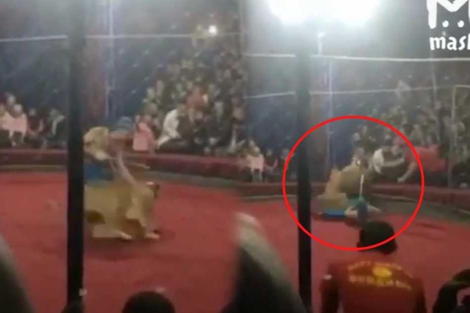 Löwe springt im Zirkus Mädchen (4) an und beißt ihr ins Gesicht