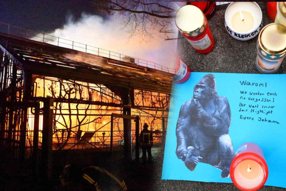 Tödlicher Brand im Zoo Krefeld: Darum steht nun das Dach im Fokus