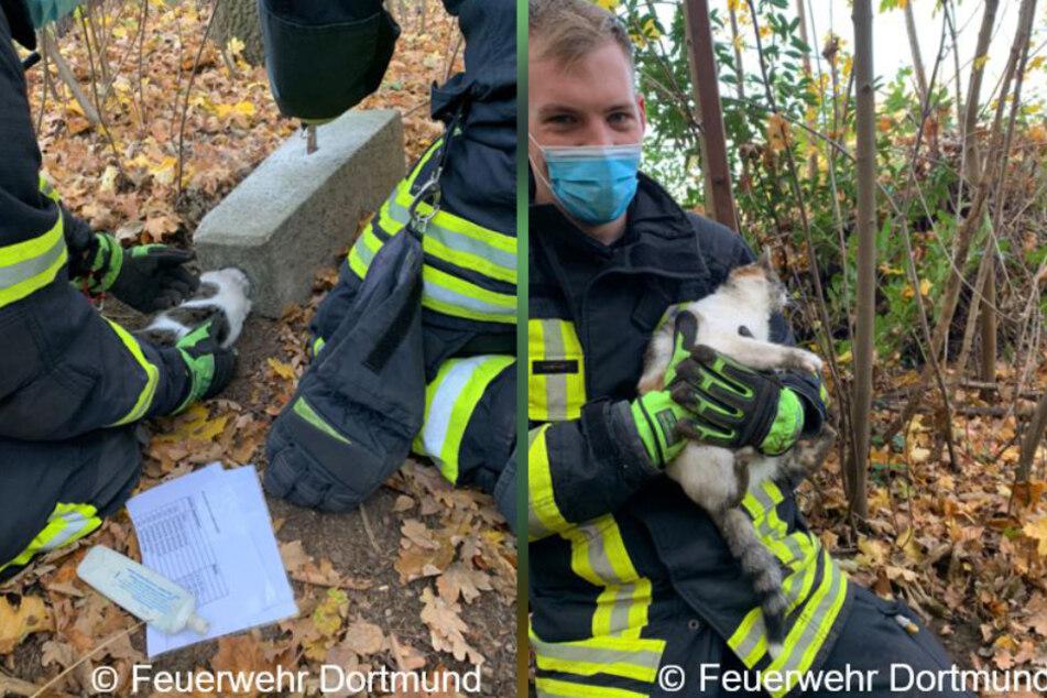 Am Sonntag ist einer Katze in Dortmund ihre Neugier zum Verhängnis geworden: Der Kopf des Tieres steckte in einem Betonblock fest.