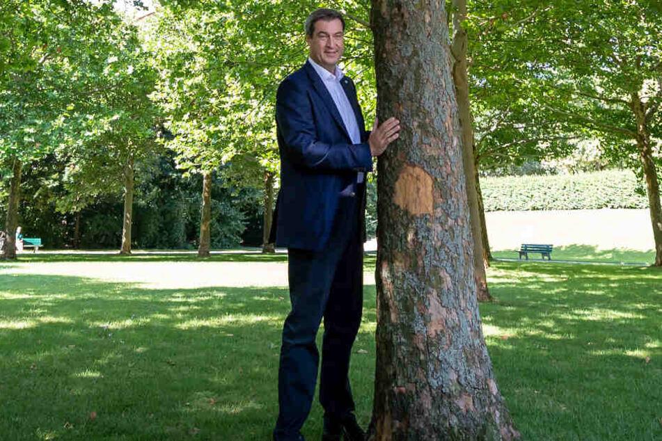 Markus Söder will mehrere Millionen Bäume in Bayern pflanzen lassen.
