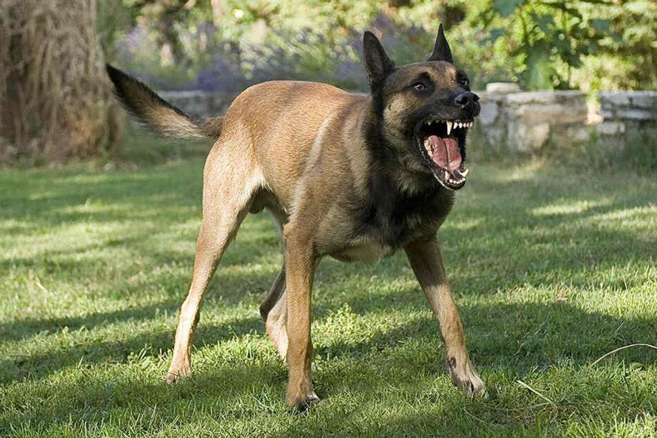 Schäferhund beißt siebenjährigem Mädchen ins Gesicht