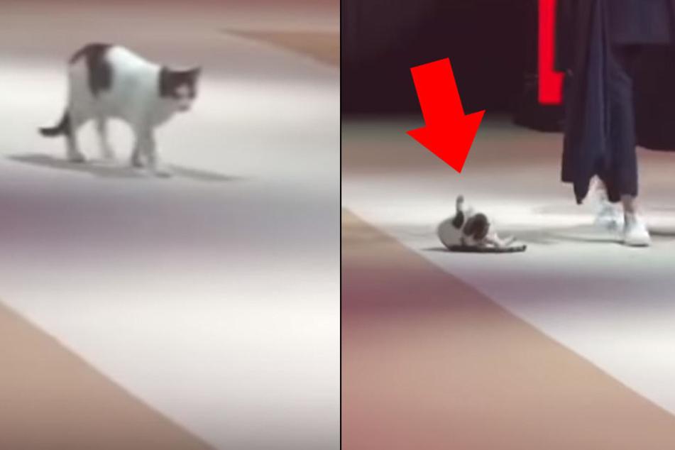 Während Modenschau! Katze leckt sich auf dem Catwalk untenrum