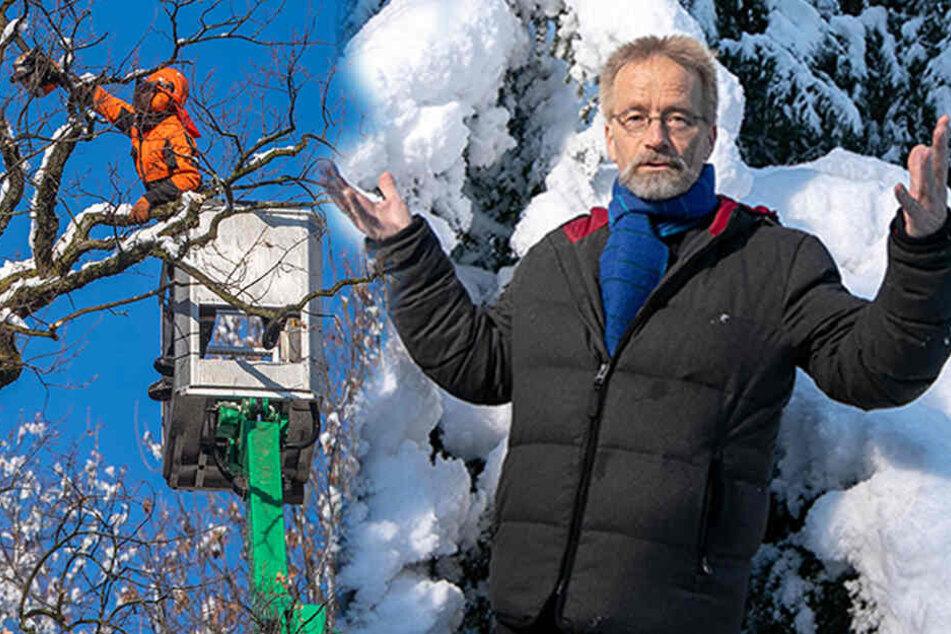 Dresden: Sachsens Feuerwehren im Schneebruch-Stress! Deshalb knicken gerade so viele Bäume um