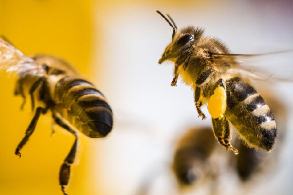 Bienenseuche am Bodensee breitet sich weiter aus