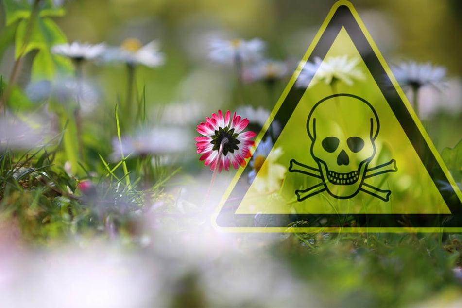 Ein Mann (60) versprühte in Mücheln (Saalekreis) Unkrautvernichter. Wegen der Hitze entwickelten sich giftige Dämpfe, wodurch vier Frauen ins Krankenhaus mussten.