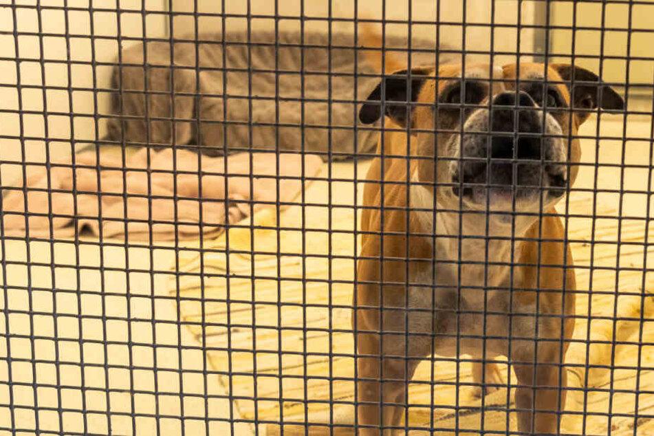 Insgesamt beschlagnahmt die Polizei 22 Hunde. (Symbolbild)