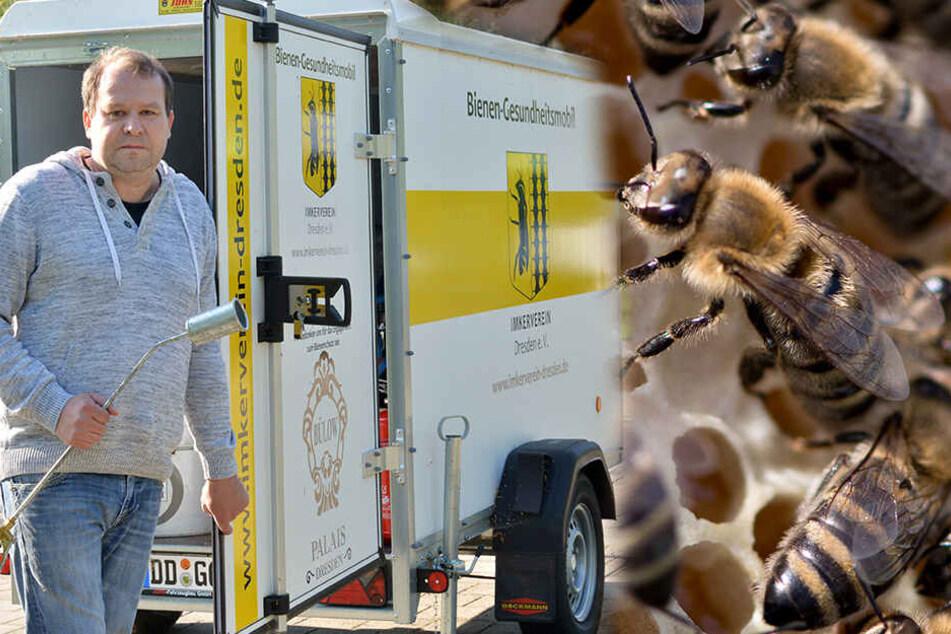Dresden: Seuchen-Alarm! Dresdner Neustadt ist jetzt Sperrgebiet für Bienen