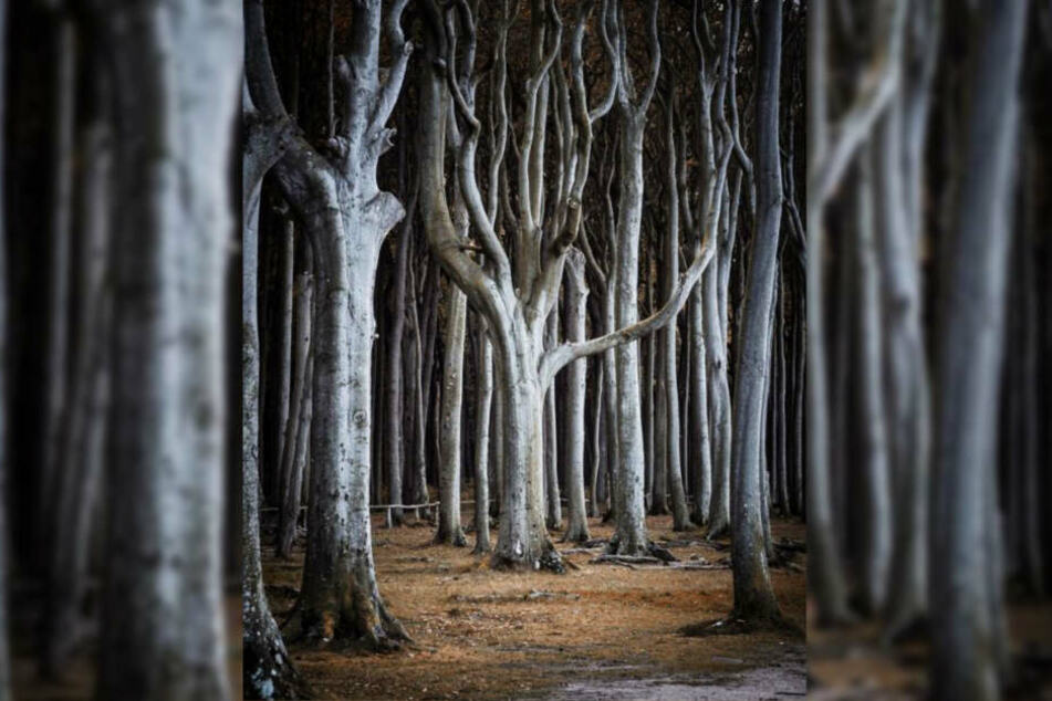 Dieser Wald ist super kahl und riesig.