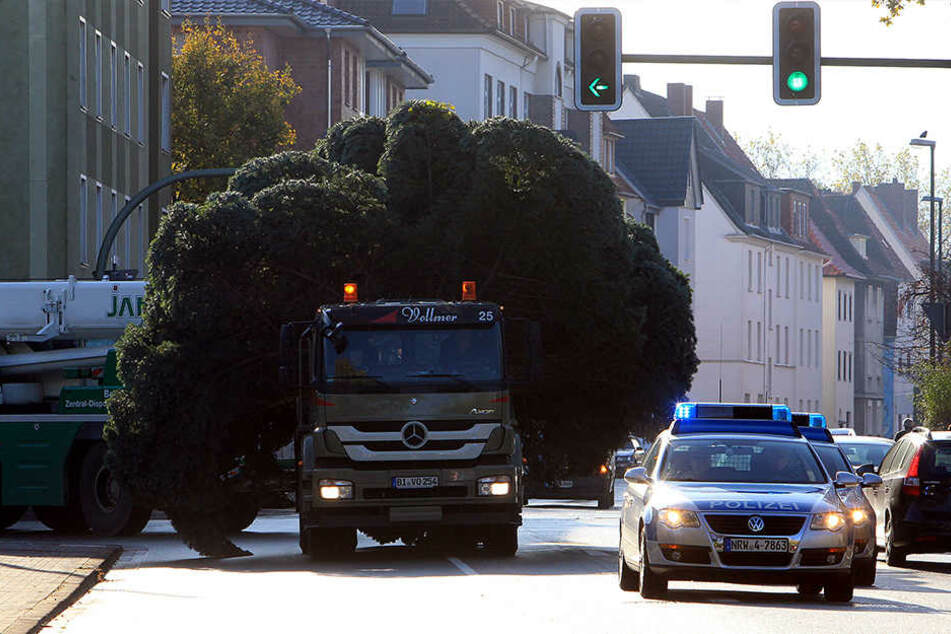 So sah der Transport der Bäume letztes Jahr aus.
