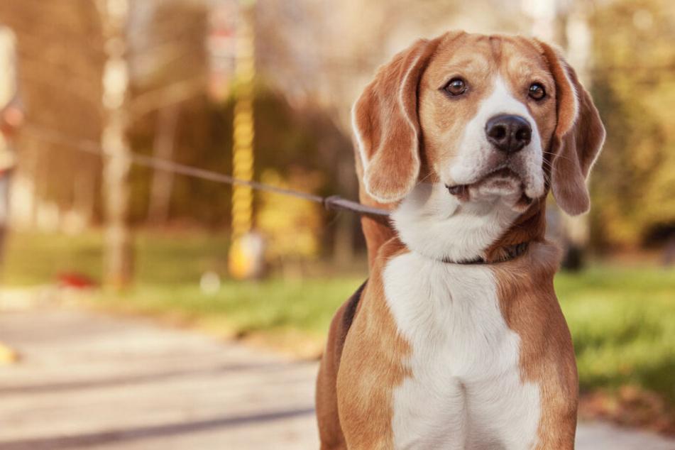 Mann will Hunde rauben: Als sich Gassigängerin wehrt, eskaliert die Situation