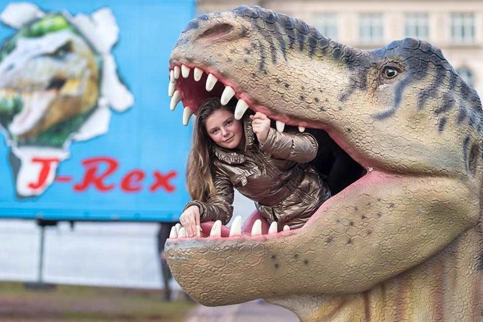 Am Mittwoch eröffnet die Dinosaurier-Ausstellung, die Exponate werden derzeit aufgebaut. Hier ist Artistin Rachel (13) im Maul eines T Rex zu sehen.