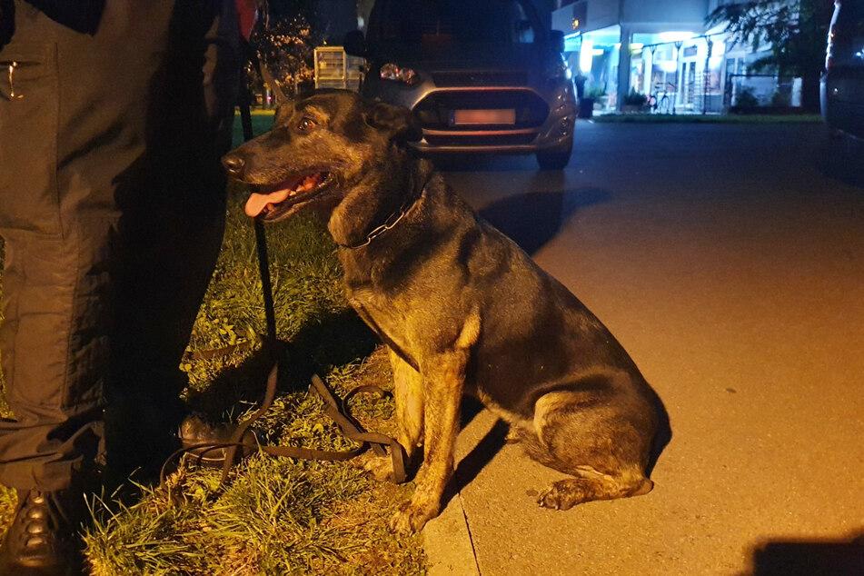 """Ein Holländischer Schäferhund namens """"Pepper"""" kam als Spürhund zum Einsatz, fand jedoch im Busch keinen Sprengstoff."""