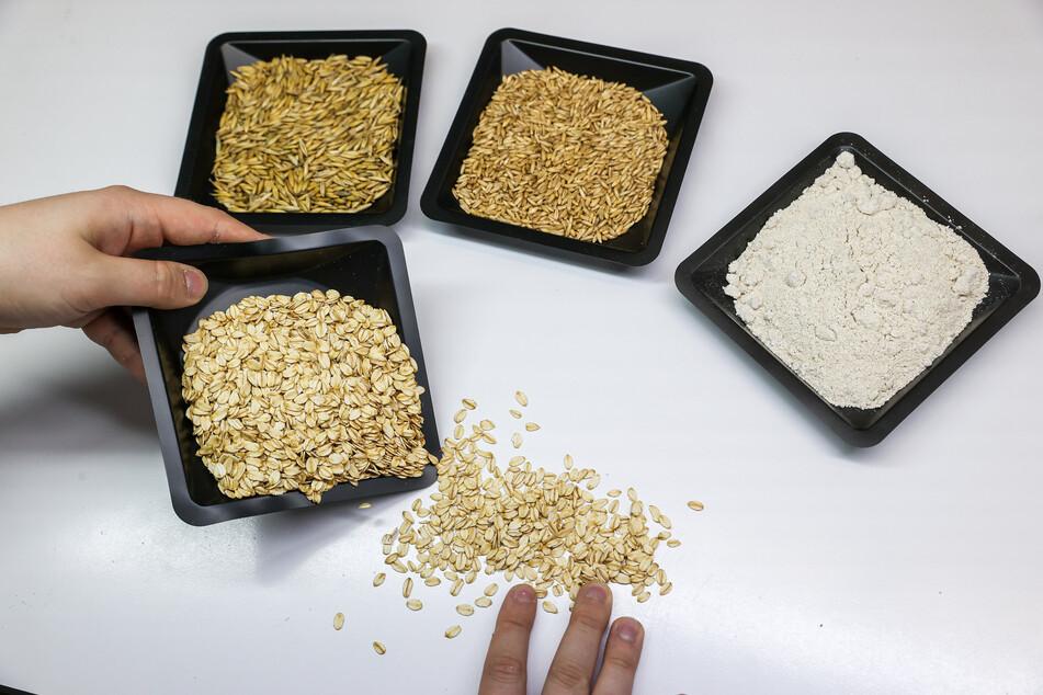 Die verschiedenen Produkte der Hafermühle sind Korn mit Schale, geschältes Korn, Hafermehl und Haferflocken (im Uhrzeigersinn).