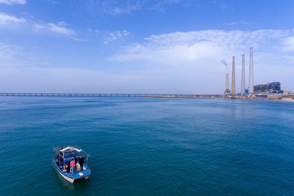 Forscher von der Universität Haifa suchen vor der Küste der nordisraelischen Stadt Chadera in der Nähe eines Kraftwerkes (Hintergrund) nach Haien im Mittelmeer.