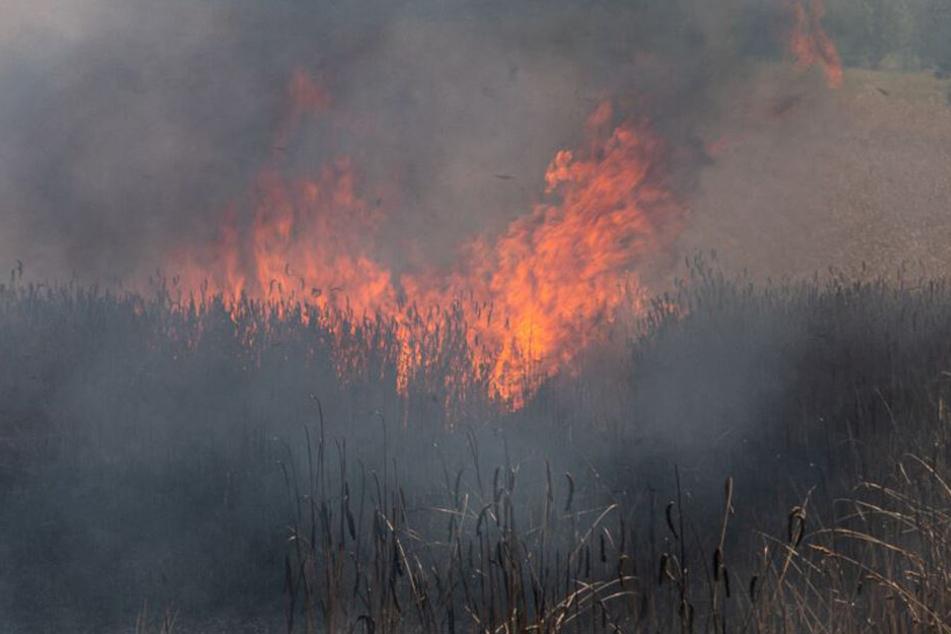 Hier steht bei heißen Temperaturen das nächste Feld in Flammen