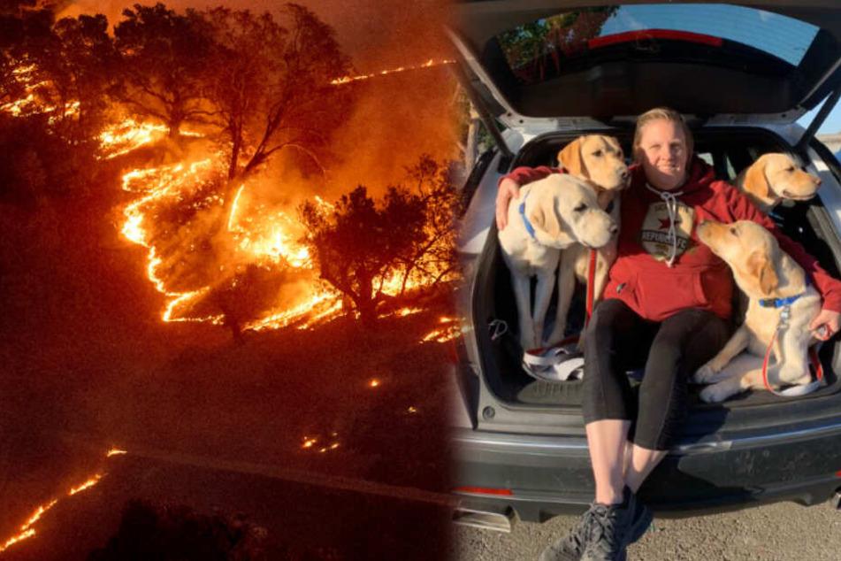 Sieben Hunde aus Feuerhölle gerettet: Diese Frau ist ein wahrer Schutzengel!