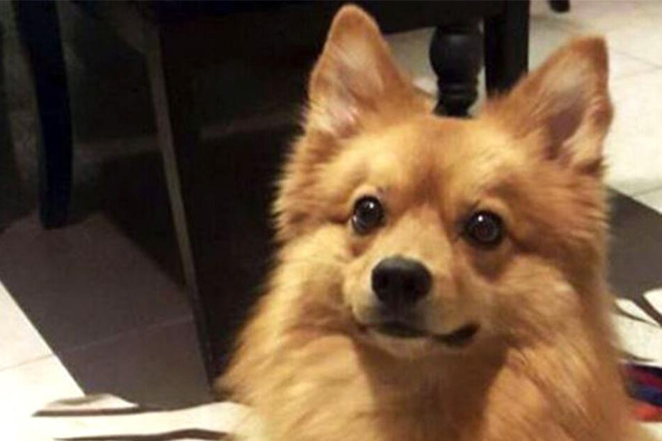 Hund rettet das Leben seines Besitzers, als dieser auf der Treppe stürzt