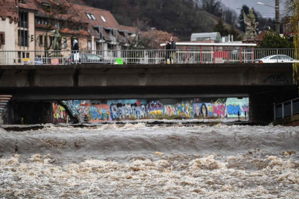 Sehr viel Wasser fließt in der Dreisam bei Freiburg.
