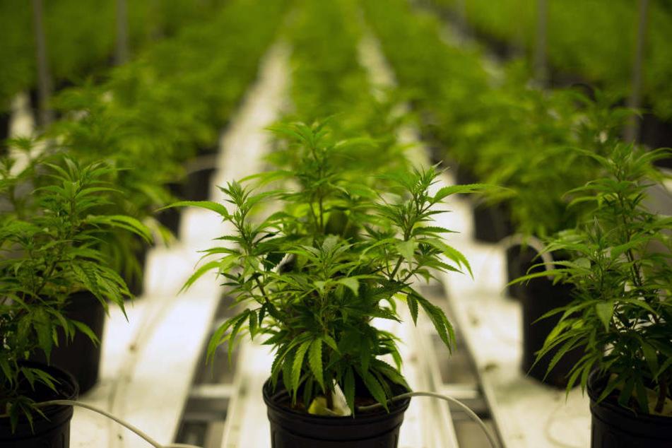 Vielleicht ist Cannabis für einige HIV-Patienten einen zeitweilige Alternative?