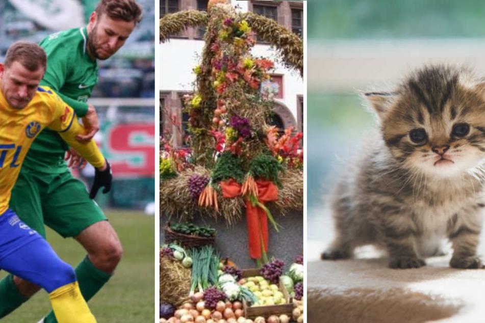 Stadtderby, Katzen-Videos, Markttage: Das ist am Sonntag los in Leipzig