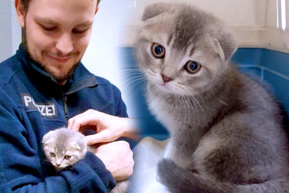 """""""Wie ein Wollknäuel"""": Polizei findet dieses süße Kätzchen"""