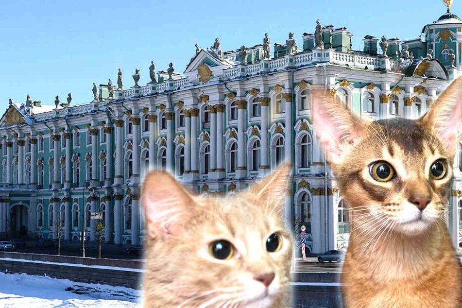 Katzen als Mittel gegen zu viele Ratten? Bei der Eremitage in St. Petersburg scheint es zu helfen.