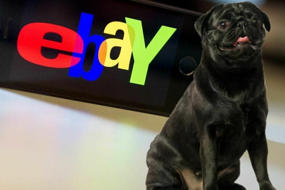 Die Stadt Ahlen verkaufte den Hund über Ebay. (Symbolbild)