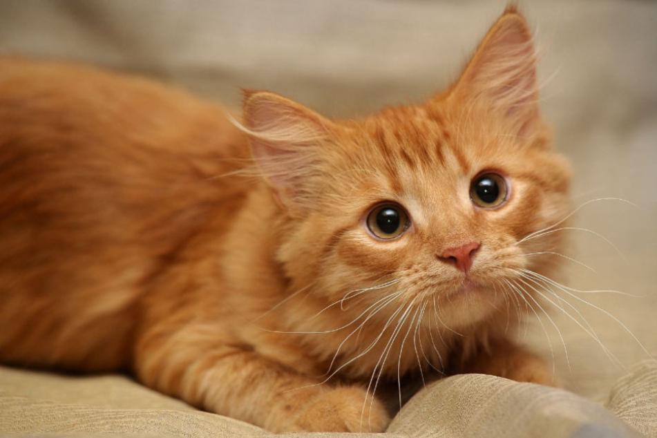 Wie grausam: Katzenhasser misshandelt süßen Kater zu Tode!