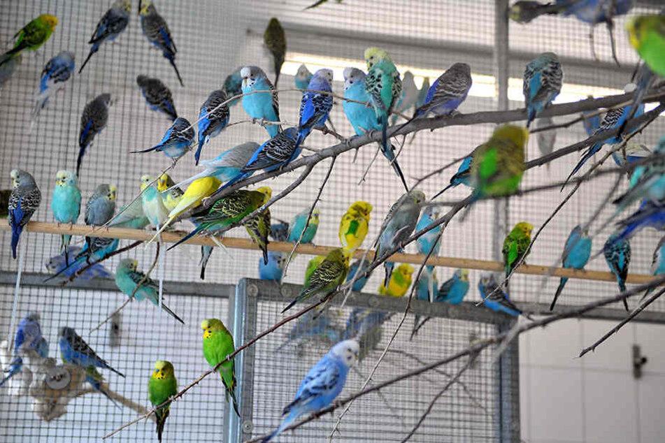 Ausgeflogen! Die Ziervögel des Leipzigers sind weg. (Symbolbild)