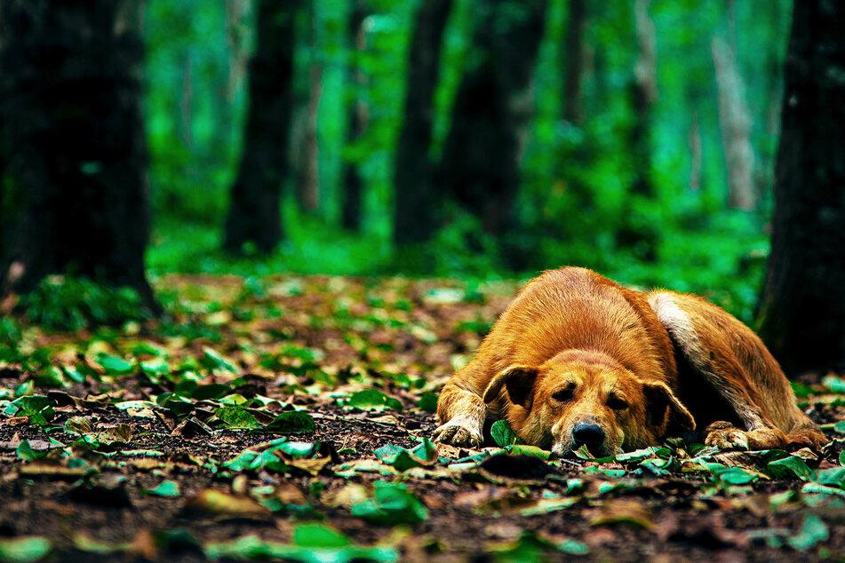 Hundehalter geht mit seinem Vierbeiner in den Wald, dann gibt's einen lauten Knall