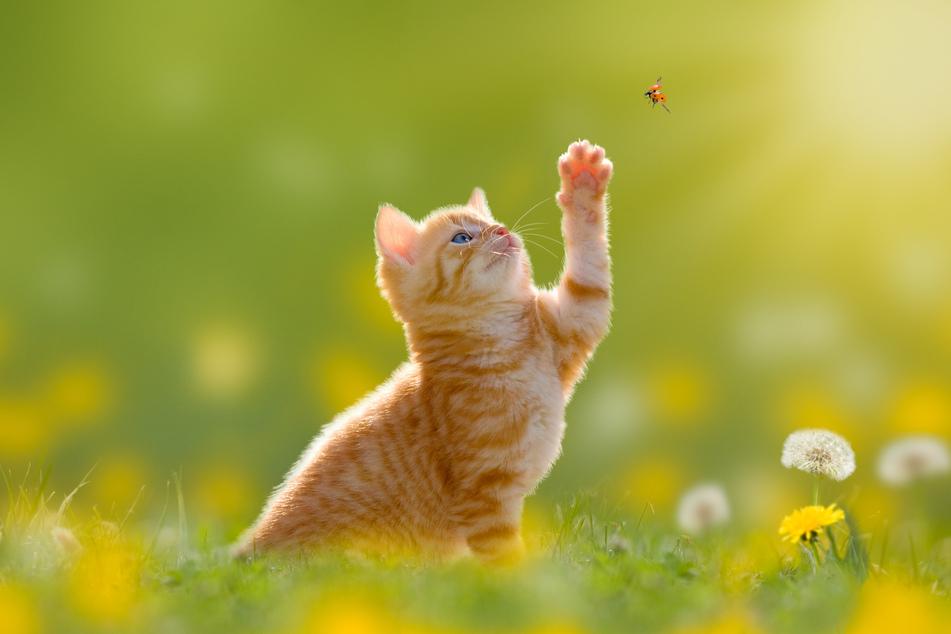Gefährlich für Katzen: Diese Insekten sollten sie nicht fressen
