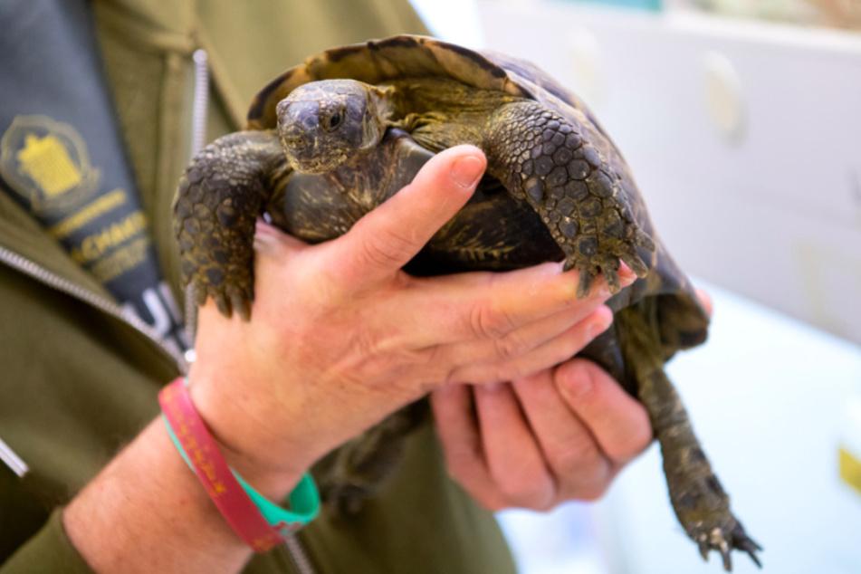 Wenn Tierbesitzer sterben: Wohin mit Hund, Katze oder Schildkröte?