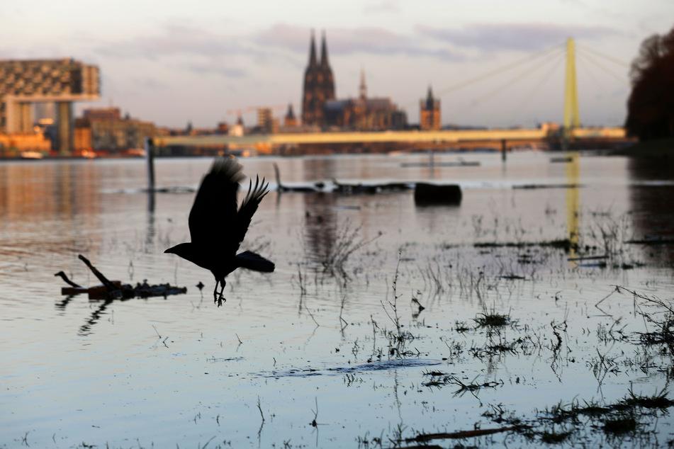 Köln: Hochwasser-Marke II erreicht, Schifffahrt muss eingestellt werden