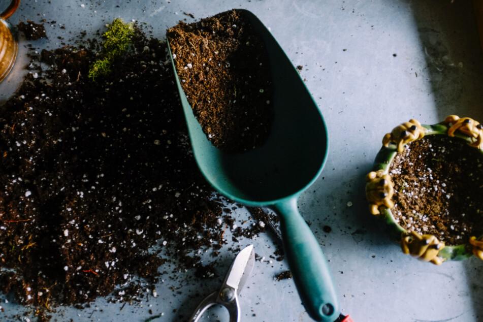 Beim Umtopfen solltet Ihr auf hochwertige Pflanzenerde setzen.