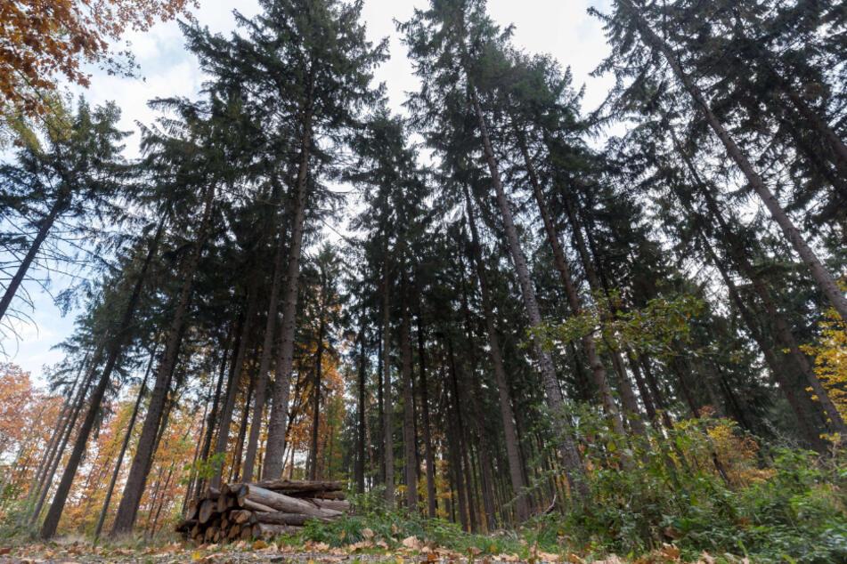Der Zeisigwald lädt zum Verweilen ein.