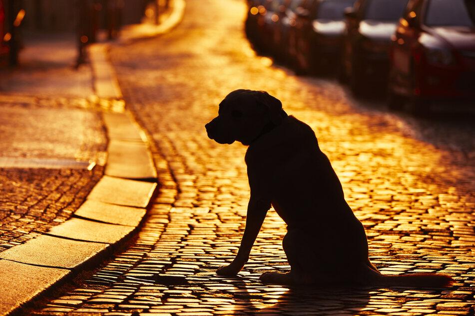 Hund wartet drei Monate lang in Krankenhaus auf verstorbenen Besitzer