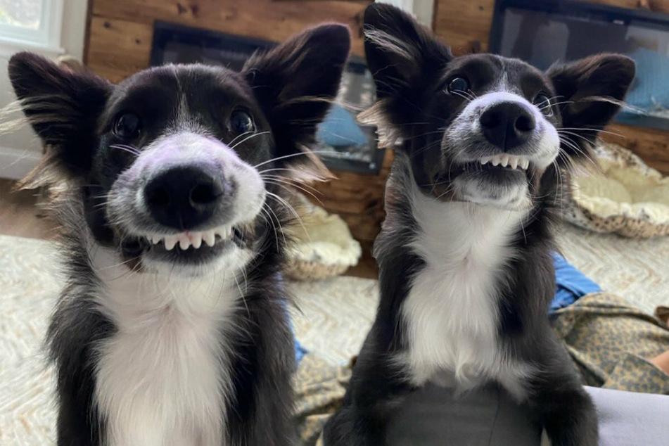 Sieht Fake aus, ist aber echt: Der Hund Sky besitzt ein ganz besonderes Lächeln.
