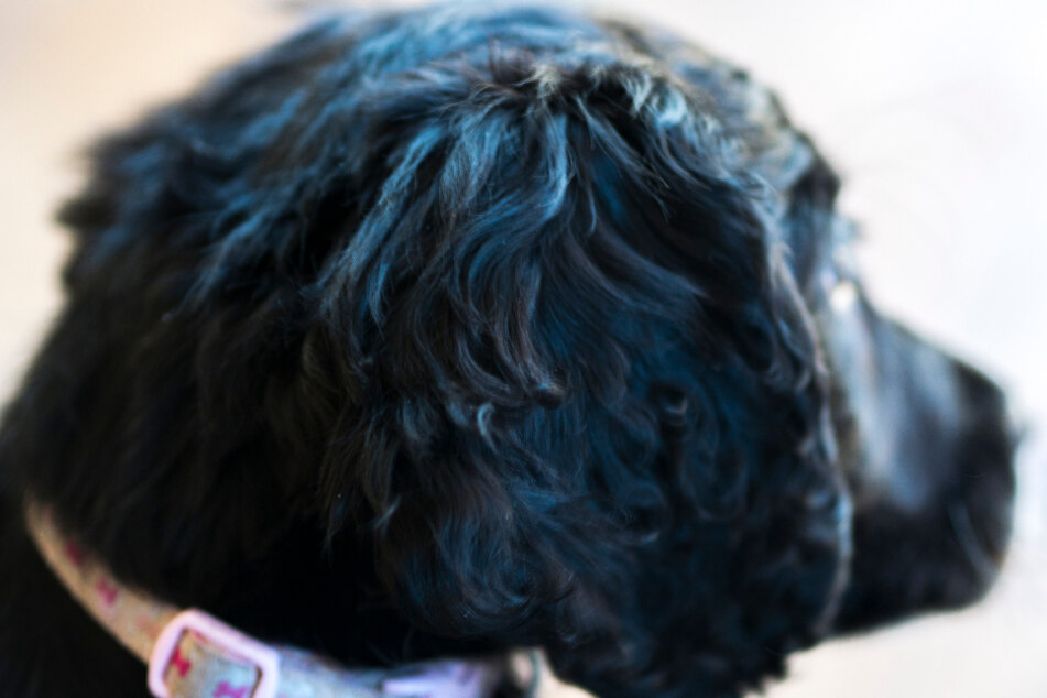 Frau (33) hat auf mehrere Arten Sex mit Hund: Ex-Partner rächt sich heftig