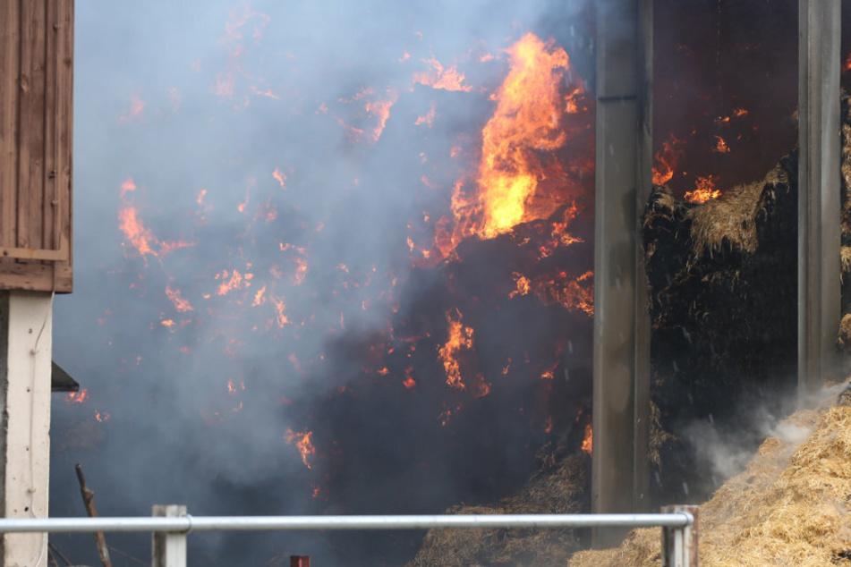 Dresden: Flammen-Inferno: Milchviehanlage nahe Dresden brennt lichterloh!