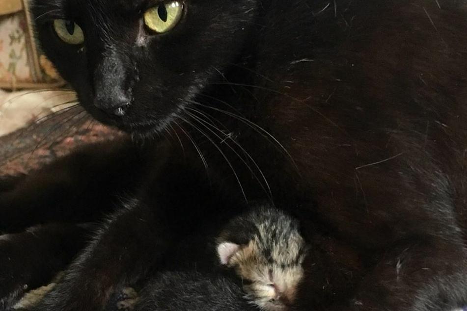 Die Geburt der Katzenbabys kam für Ida Floreak ziemlich überraschend.