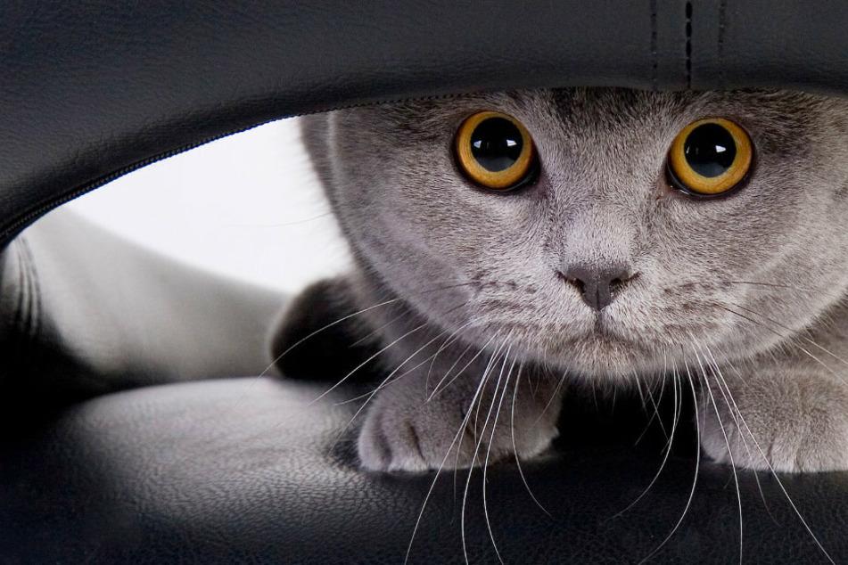 Wie schütze ich meine Wohnung vor meiner Katze?